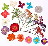 100pcs Mixed Pressed Press Dried Flower Filler for Epoxy Resin Pendant Necklace Jewelry