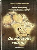 Geochelone sulcata - tortuga africana de espolones