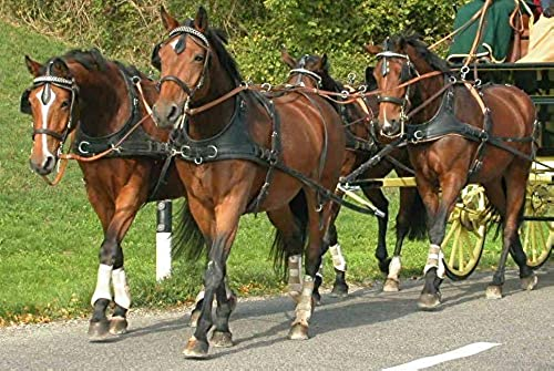 Harnais à 4 chevaux colliers bricoles - chevaux de trait, Noir et noisette