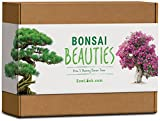 Sow Lush Set de Cultivo de bonsái «Bonsai Beauties», Ideal como Regalo Todo lo Que Necesitas...