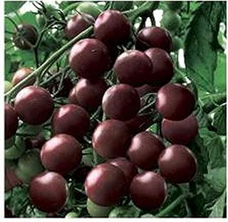 Black Cherry Tomato- A True Black Cherry Tomato..& WOW!!--What Taste!!(25 - Seeds)