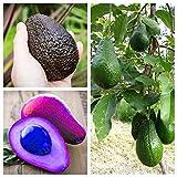 bloom green co. saldi ! 5 pz bonsai avocado delicious dolce albero da frutto facile da coltivare per la verdura giardino della casa biologica in vaso della pianta del regalo per i bambini: j