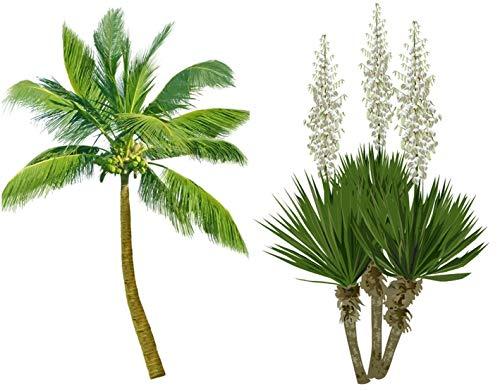 Frostharter Mix 6 Arten je 10 Samen von Palmen Yucca Samen