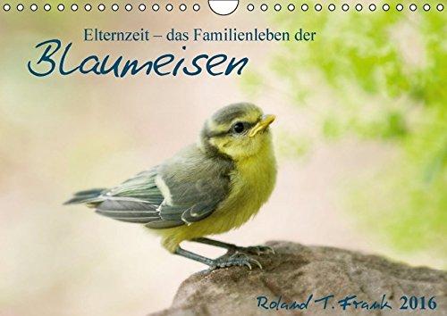 Elternzeit - das Familienleben der Blaumeisen (Wandkalender 2016 DIN A4 quer): Fotografien rund um den Nistkasten einer Blaumeisenfamilie. (Monatskalender, 14 Seiten) (CALVENDO Tiere)