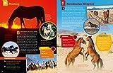 WAS IST WAS Pferde und Ponys: Reiten, Fohlen, Pferdesprache, Turniere, Zucht und Pflegepferd! (WAS IST WAS Edition) - 13
