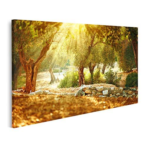 islandburner Bild Bilder auf Leinwand Olivenbäume Garten Mediterraner Olivenhain mit altem Olivenbaum Wandbild Poster Leinwandbild QBRB