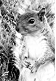 Mini Kalender 2017 - Eichhörnchen: ca. A6 - 1 Woche pro Seite