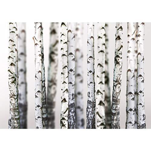 Fototapete Wand Foto Tapete Bild Vliestapete selbstklebende Textiltapete - BLACK AND WHITE BIRCH TRUNKS - Birkenwald 3D perspektive Birke Stämme Wald - no. 044, Größe:300x210cm Vlies HiQ