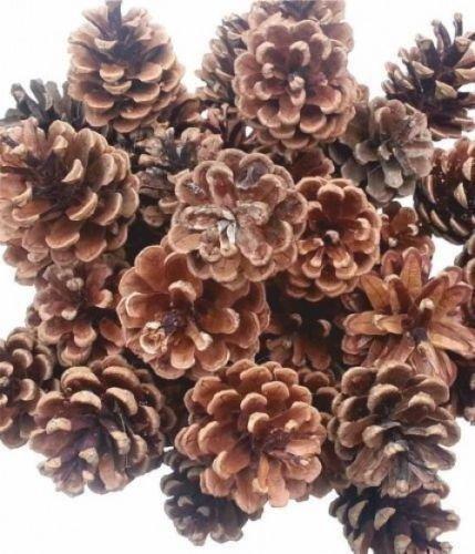 Gem Supplies UK Piñas Naturales para Decoración Navideña - 500 gr (25 Unidades)