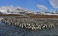 ジグソーパズル500ピース大人のジグソーパズルラージクラシック木製パズルおもちゃ減圧南極ペンギン