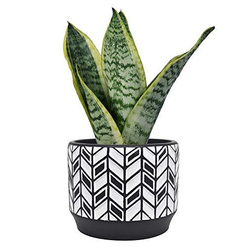 Blomelf Cement Planter Pot Indoor  53 Inch Medium Flower Plant Pots with Drainage Hole Elegant Cylinder Bonsai Garden Clay Containers Unglazed Potting Decorative Patio Black
