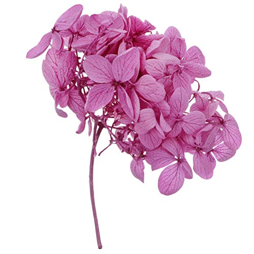Flores Secas Hortensias Naturales flores secas  Marca TOYANDONA