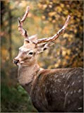 Cualquier Animal ciervo-Frameless-50x75cm,Pintura al óleo sobre Lienzo Imagen de Pared Arte Animal Imagen Moderna Decoración para Sala de Estar