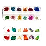 LONG TAO 2 Boxes (48 Pieces) Mini Natural Dried Flowers and Leaves Dried Flower for Resin Jewelry Pendant Bracelet Scrapbooking Arts & Crafts DIY Cards Making