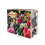 28x Blumenzwiebeln - RATATOUILLE Mix | Frühjahrsblüher Zwiebeln | Tulpen und Narzissen | Gemischte Farben | Mehrjährige blühende Pflanzen