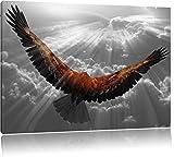anmutiger Adler über den Wolken schwarz/weiß Format: