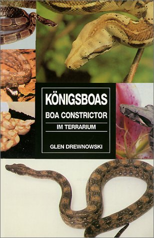 Königsboas ( Boa Constrictor) im Terrarium