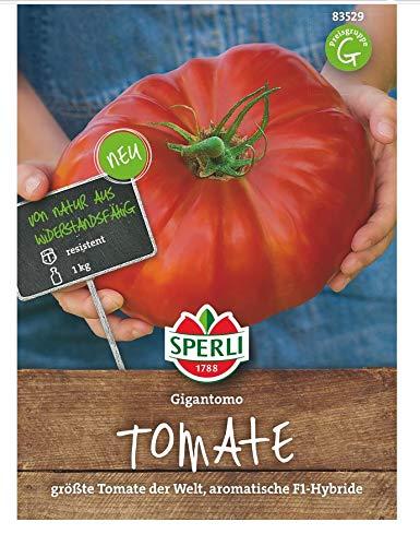 Tomate Gigantomo F1 (Fleischtomate), größte Tomate der Welt, sehr aromatisch