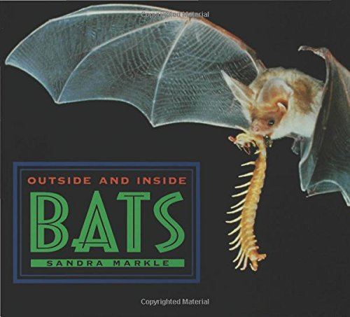 Outside And Inside Bats