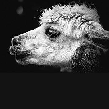 The Alpaca EP
