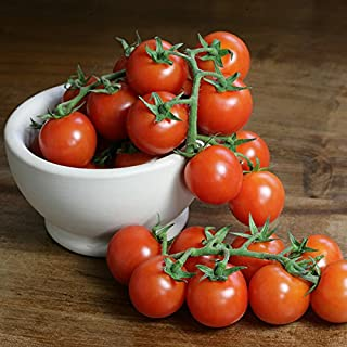 Tomato - Sweet n Neat Red - 10 Seeds