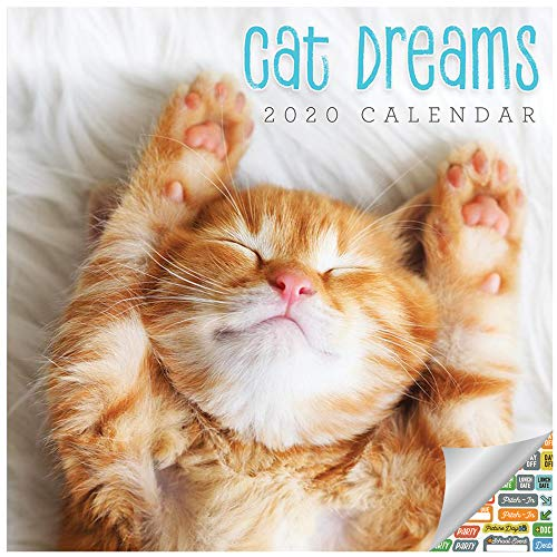 Kittens Calendar 2020 Set - Deluxe 2020 Cat Dream Wall Calendar with Over 100 Calendar Stickers (Kittens Dreaming Gifts, Office Supplies)