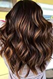 Ombre Highlight Lace Front Wig Human Hair with Baby Hair 1B/33#/30# Highlight Color Body Wave Wig 150% Density 14 Inch Brazilian Wet and Wavy Human Hair Wigs Pre plucked Lace Frontal Free Parting