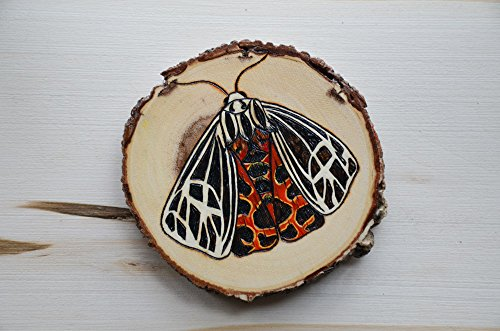 Virgin Tiger Moth Wall Art