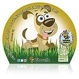 Plantón Natural de Hierba para Perros Maceta 1 L