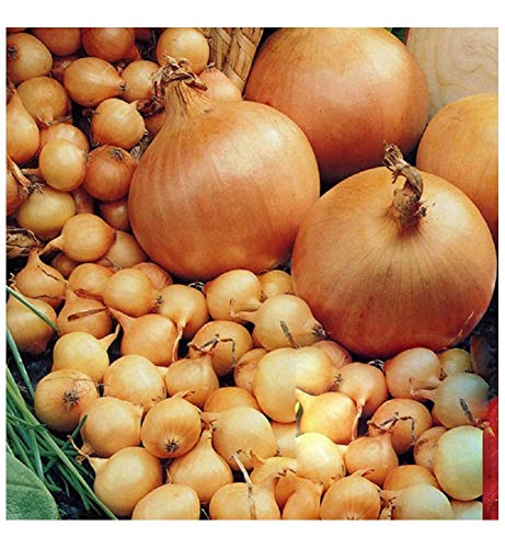 Premier Seeds Direct ORG079 Organic Stuttgart Onion Seeds (Confezione da 600)