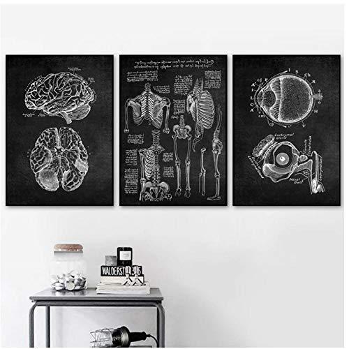 DLFALG Obra de anatomía humana Imagen médica de la pared Sistema de órganos esqueléticos Póster Vintage Impresión de lienzo Pintura corporal educativa Decoración-40x50cmx3 Sin marco