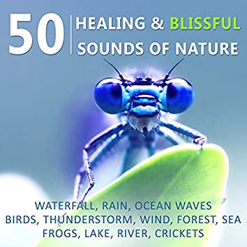 50 Healing & Blissful Sounds of Nature: Waterfall, Rain, Ocean Waves, Birds, Thunderstorm, Wind, Forest, Sea, Frogs, Lake, River, Crickets