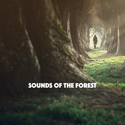 Nature Sounds, Rain for Deep Sleep & Nature Sound Collection