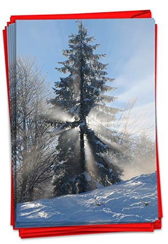 The Best Card Company - 12 Beautiful Christmas Cards with Envelopes (1 Design, 12 Cards) - Bulk Boxed Set of Holiday Greetings - Christmas Sunrise Tree B6655CXSG