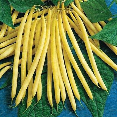 20 pcs/sac de haricots Graines bio délicieux Phaseolus vulgaris plante verte Semences-nutrition Graines de légumes non OGM 1