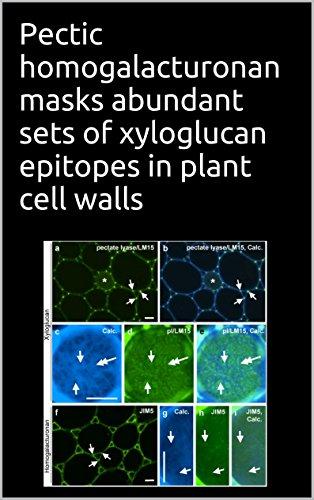 Pectic homogalacturonan masks abundant sets of xyloglucan epitopes in plant cell walls (English Edition)