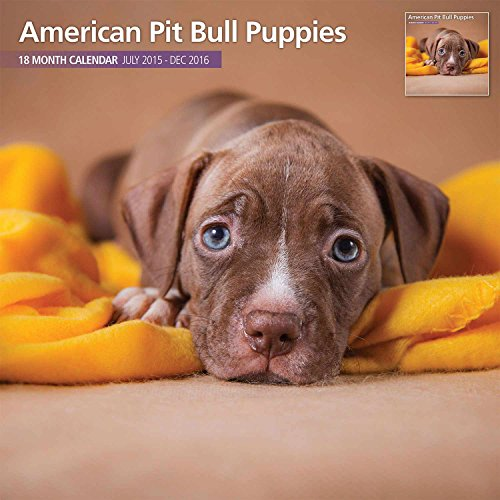 American Pit Bull Puppies 18 Month 2016 Traditional Wall Calendar