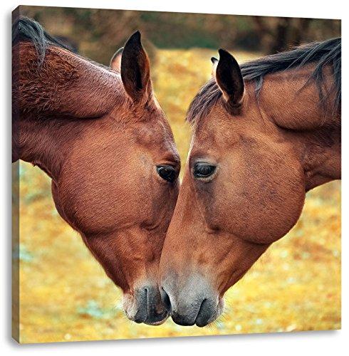 zwei schmusende Pferde, Format: 40x40 als Leinwandbild, tolle Bilder fertig auf Holzrahmen gespannt, Kunstdruck auf Wandbild mit Rahmen, günstiger als Gemälde oder Ölbild, kein Poster oder Plakat