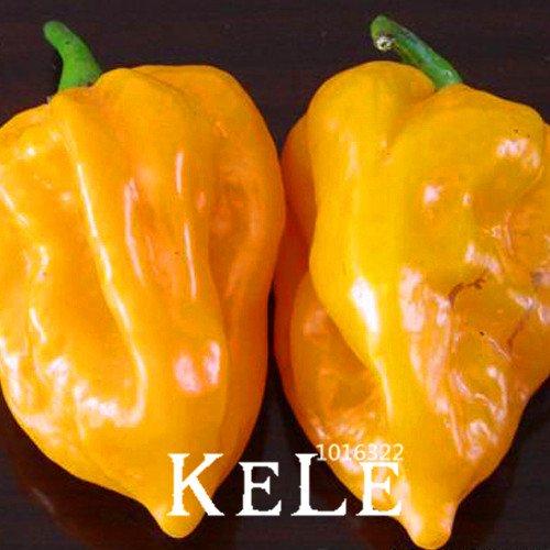 Inde diable Hot Chili Patio Jardin Pot Vert Organique vegetable Seeds plus de Chile du monde – 100 graines/sac, # jb6nix