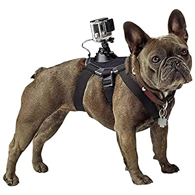 GoPro Fetch Dog Harness - Official GoPro Mount from GoPro Camera