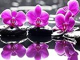SKYZAHX DIY 5D Peinture Au Diamant Kits Orchidées et Pierres Point De Croix Broderie Diamond Painting Kits Salon Chambre Décoration Autocollant Mural 30x40 cm