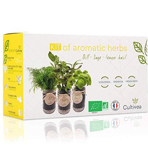 Cultiva tus propias hierbas aromáticas - 100% ecológicas: semillas orgánicas - Decora tu hogar con un huerto urbano. (Eneldo, Salvia, Albahaca Limón)