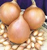 Sturon - Juego de cebolla (25 kg, tamaño 10/21)