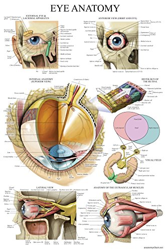 Laminated Eye Anatomical Poster - Human Eye Anatomy Chart - 18 x 27
