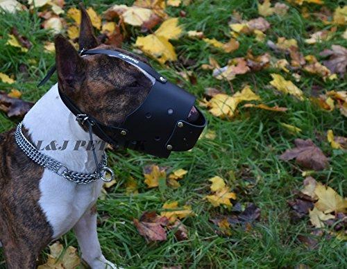 Museau de cuir pour le chien Bull Terrier (ZB1)