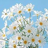 RNSUNH Lot de 6 marguerites artificielles en soie de 53,3 cm pour arrangements floraux, décoration d'intérieur, mariage