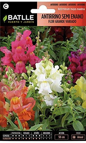 Semillas de Flores - Antirrino Semi enano flor grande variado - Batlle