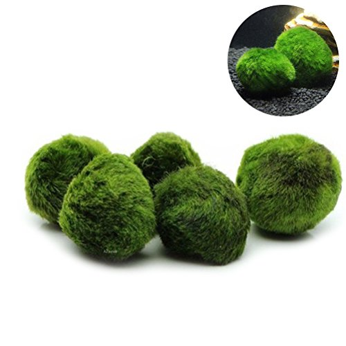 Ueetek 5PCS Marimo muschio palla piante acquario terrario Cladophora ornamenti per acquario