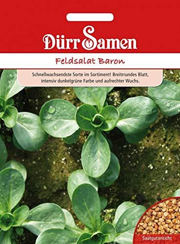 Dürr Samen 1941 Feldsalat Baron (Feldsalatsamen)