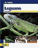 Leguane, Ihr Hobby